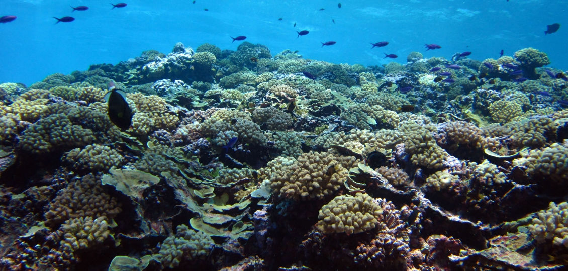 New Caledonia Is Taking New Steps To Protect Its Coral Reefs